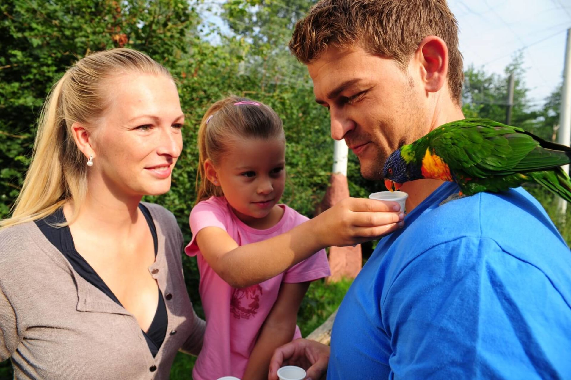 Feed the parrots